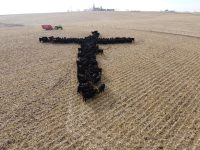 Iowa priest-photographer surprised by appeal of viral cattle cross image